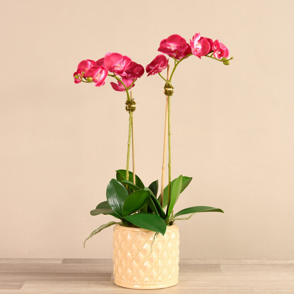 Bloomr-USA Flowers Medium / Magenta Orchid Arrangement in Ceramic Vase artificial flowers artificial trees artificial plants faux florals