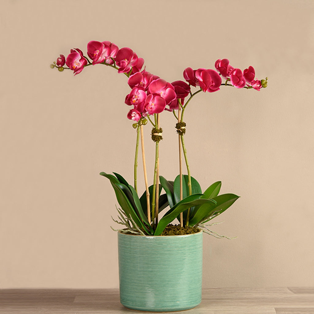 bloomr-usa Flowers Medium / Magenta Placid Orchid Arrangement artificial flowers artificial trees artificial plants faux florals