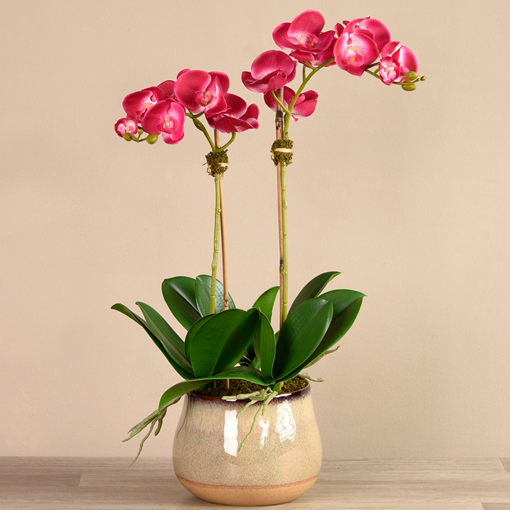 bloomr-usa Flowers Medium / Magenta Santa Fe Orchid Arrangement artificial flowers artificial trees artificial plants faux florals