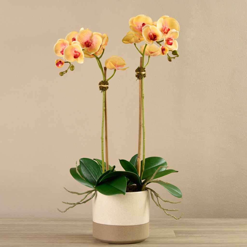 Bloomr-USA Flowers Medium Orchid Arrangement in Ceramic Vase artificial flowers artificial trees artificial plants faux florals