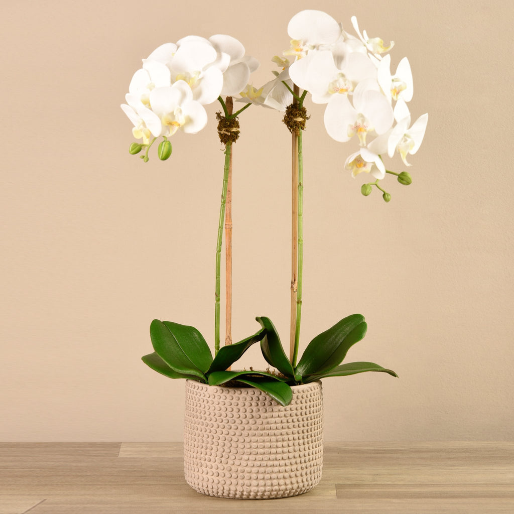 Bloomr-USA Flowers Medium Orchid Arrangement artificial flowers artificial trees artificial plants faux florals