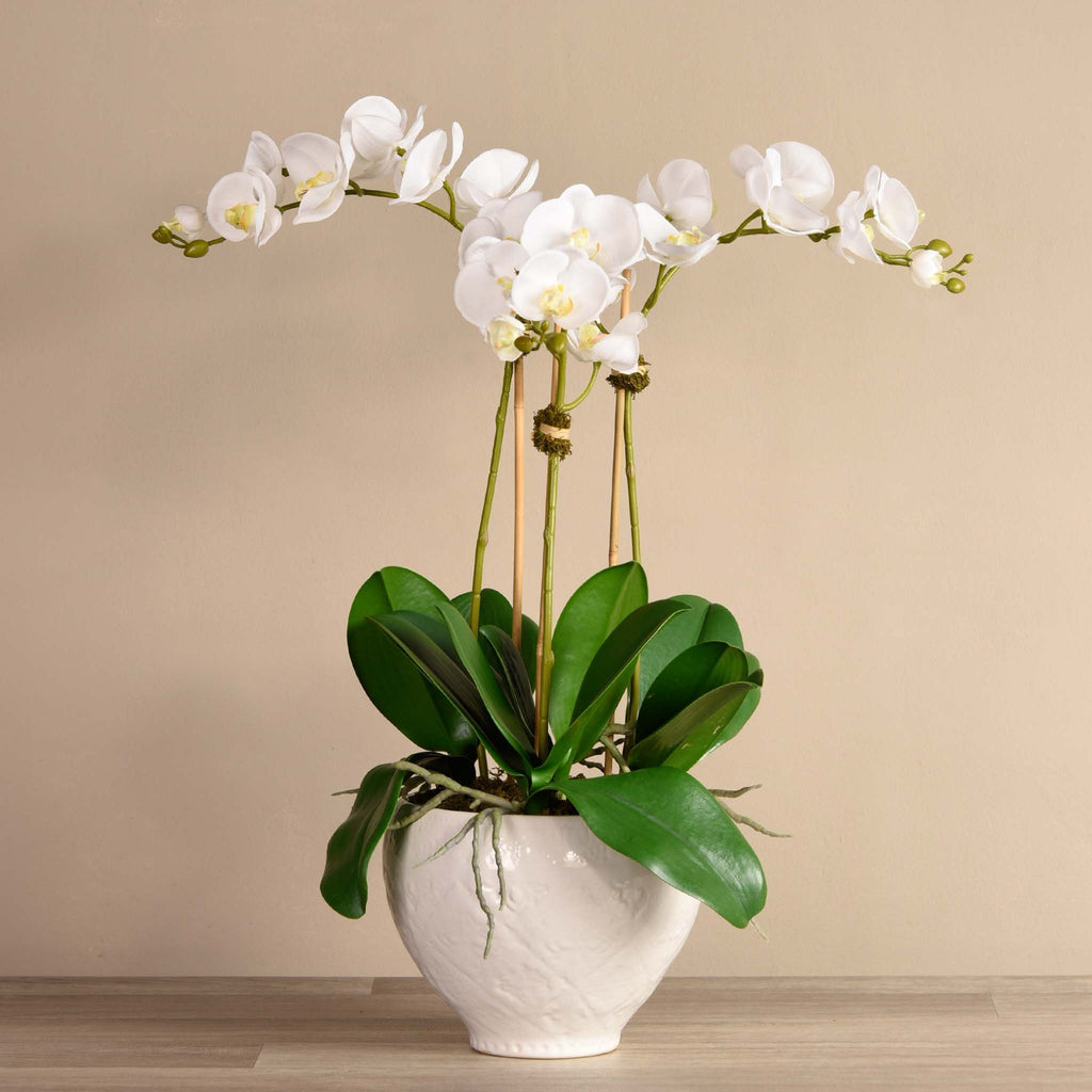 bloomr-usa Flowers Medium / White Moroccan Orchid Arrangement artificial flowers artificial trees artificial plants faux florals