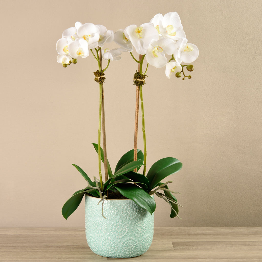 Bloomr-USA Flowers Medium / White Orchid Arrangement in Ceramic Vase artificial flowers artificial trees artificial plants faux florals