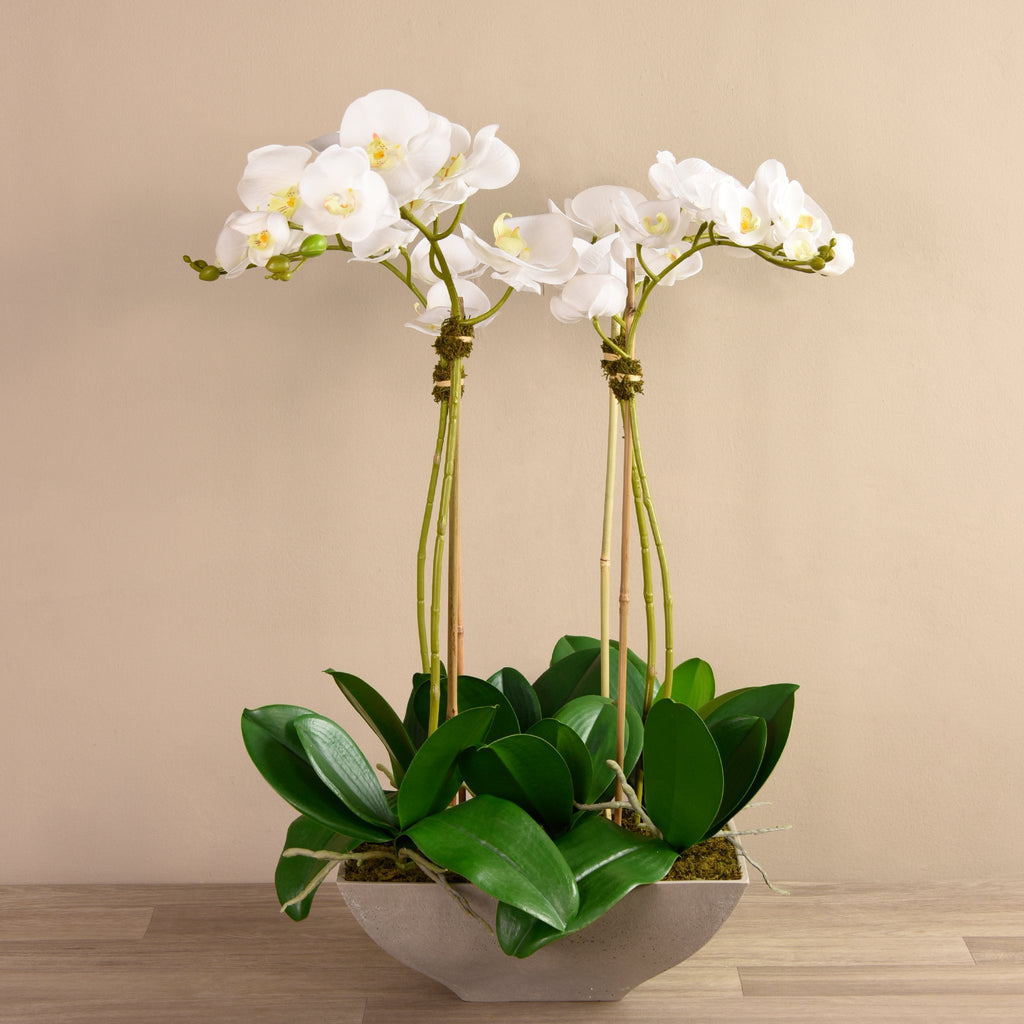Bloomr-USA Flowers Medium / White Orchid Arrangement artificial flowers artificial trees artificial plants faux florals