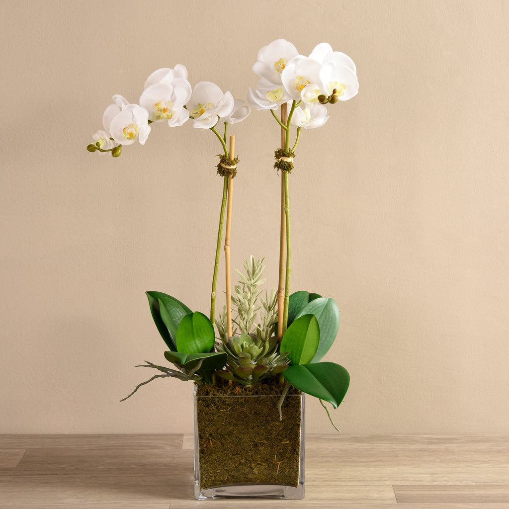 bloomr-usa Flowers Medium / White Orchid & Succulent Arrangement (Square Vase) artificial flowers artificial trees artificial plants faux florals