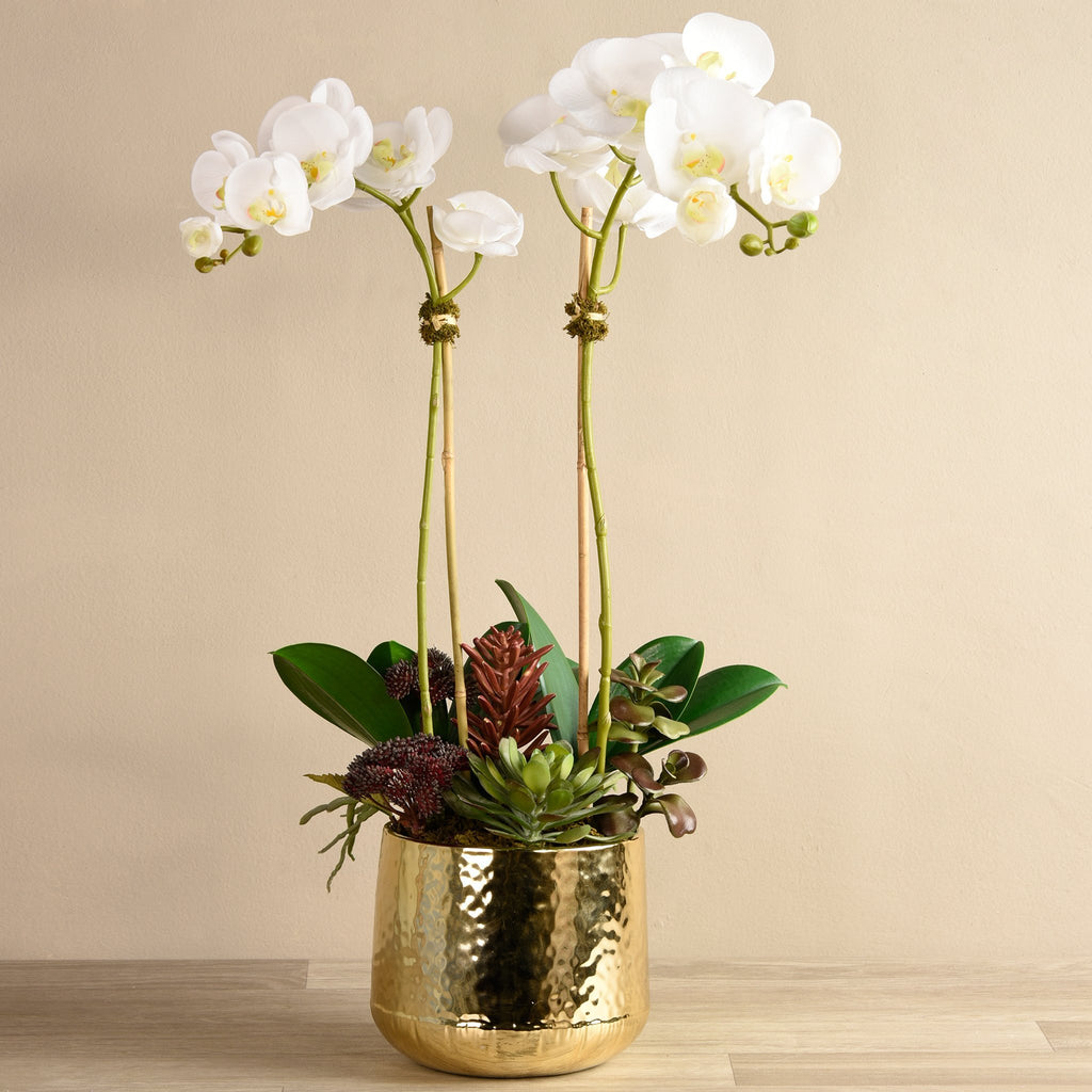 Bloomr-USA Flowers Medium / White Orchid With Succulents artificial flowers artificial trees artificial plants faux florals