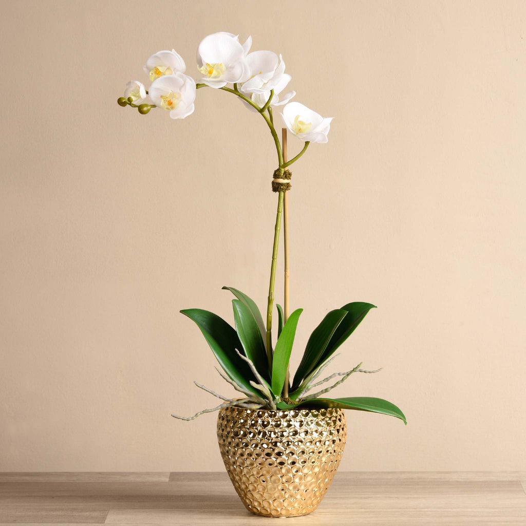 bloomr-usa Flowers Medium / White Paradise Orchid Arrangement artificial flowers artificial trees artificial plants faux florals