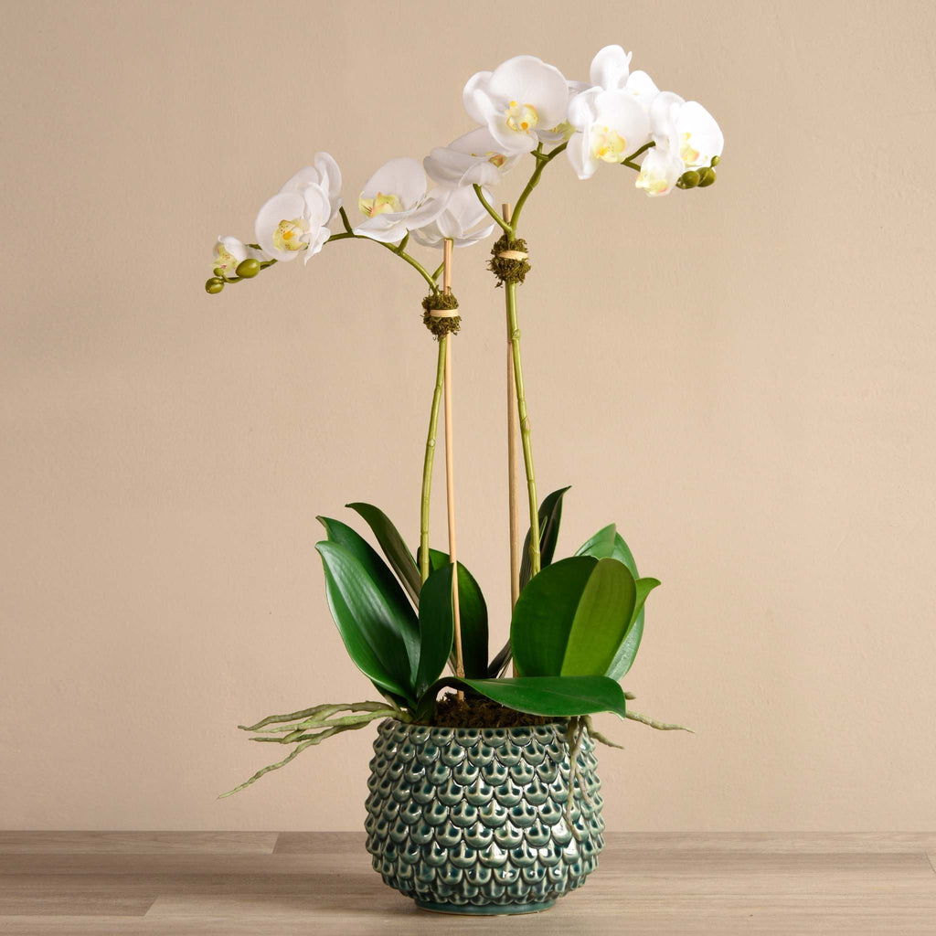 bloomr-usa Flowers Medium / White Pearl Orchid Arrangement artificial flowers artificial trees artificial plants faux florals