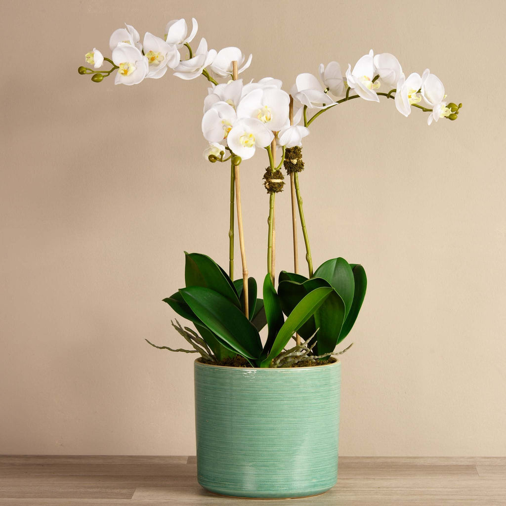 bloomr-usa Flowers Medium / White Placid Orchid Arrangement artificial flowers artificial trees artificial plants faux florals