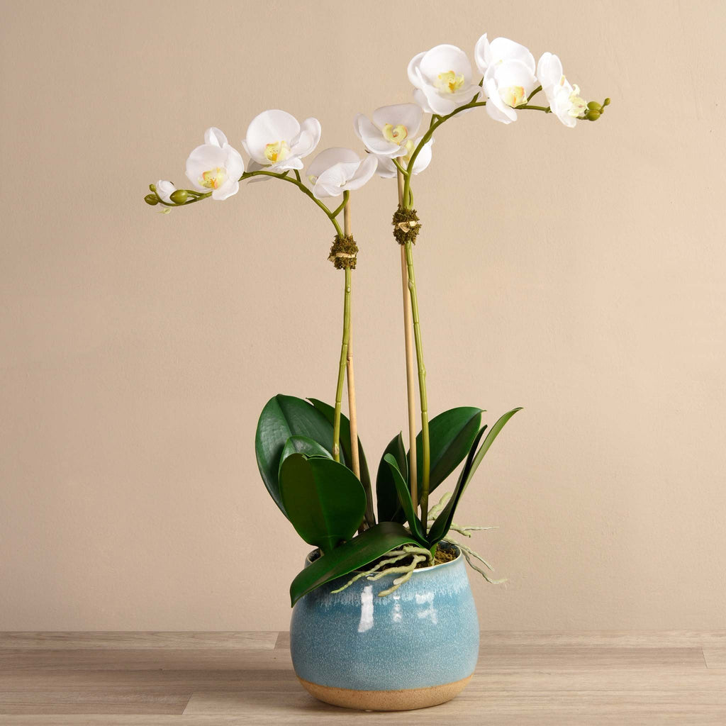 bloomr-usa Flowers Medium / White Santa Fe Orchid Arrangement artificial flowers artificial trees artificial plants faux florals