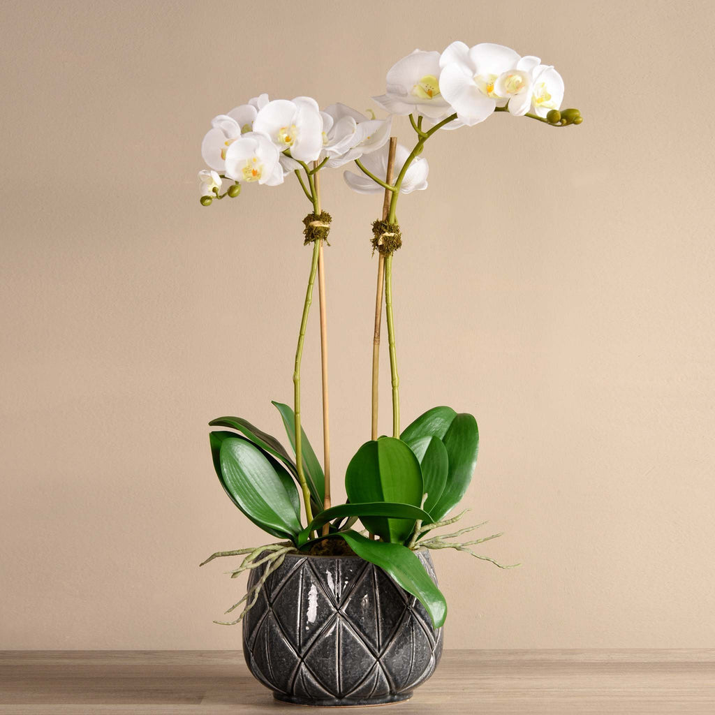 bloomr-usa Flowers Medium / White Stella Orchid Arrangement artificial flowers artificial trees artificial plants faux florals