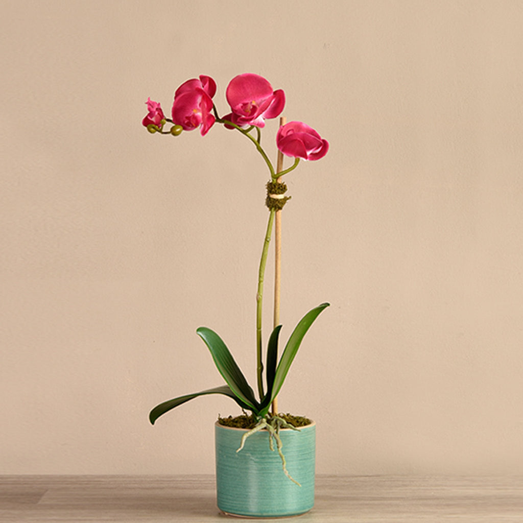 bloomr-usa Flowers Mini / Magenta Placid Orchid Arrangement artificial flowers artificial trees artificial plants faux florals