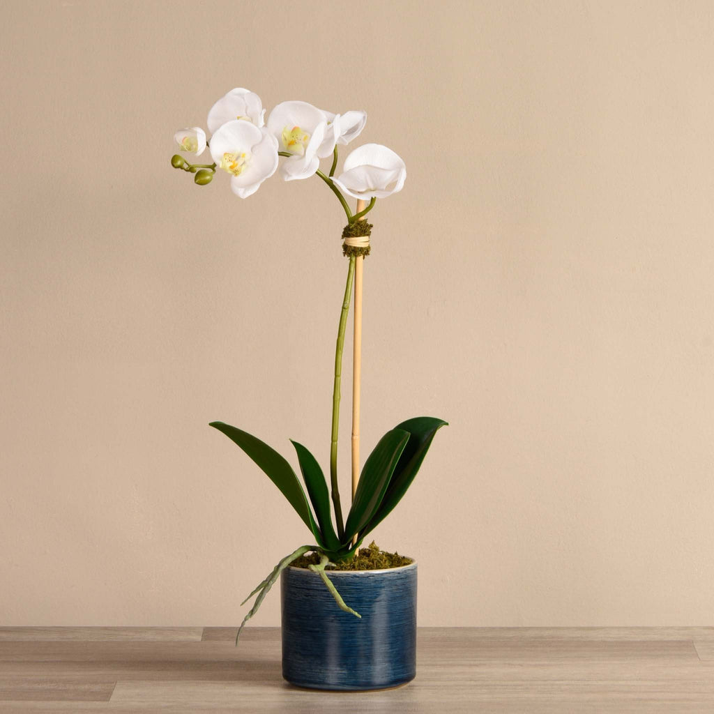 bloomr-usa Flowers Mini / White Placid Orchid Arrangement artificial flowers artificial trees artificial plants faux florals