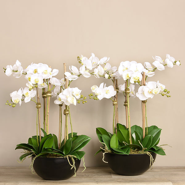 Bloomr-USA Flowers Orchid Arrangement artificial flowers artificial trees artificial plants faux florals