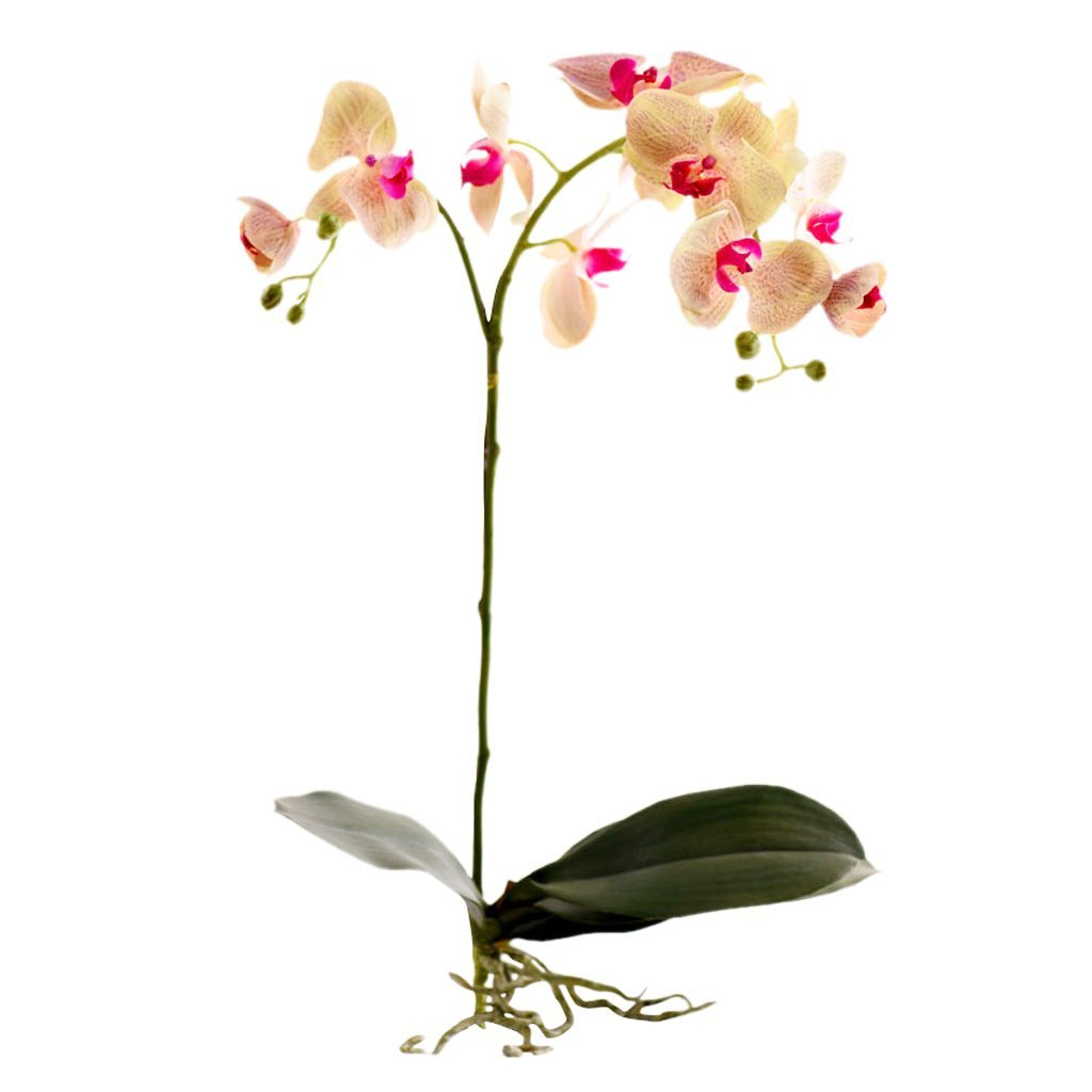 Bloomr-USA Flowers Orchid Stem artificial flowers artificial trees artificial plants faux florals