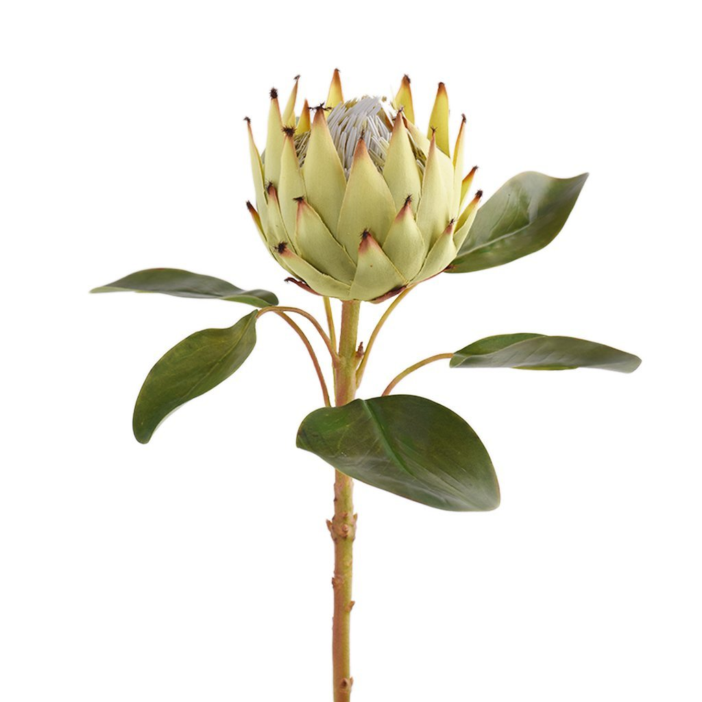 Bloomr-USA Flowers Protea artificial flowers artificial trees artificial plants faux florals