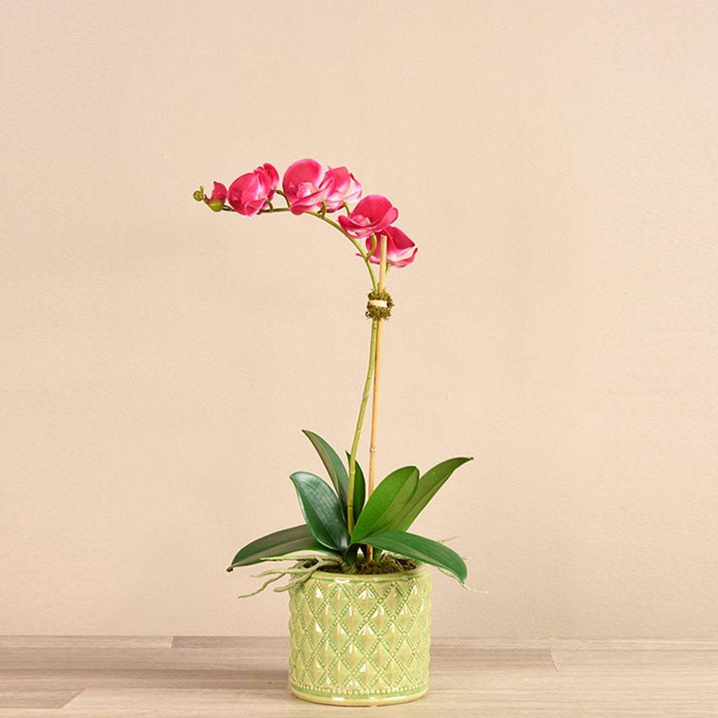 Bloomr-USA Flowers Small / Magenta Orchid Arrangement in Ceramic Vase artificial flowers artificial trees artificial plants faux florals