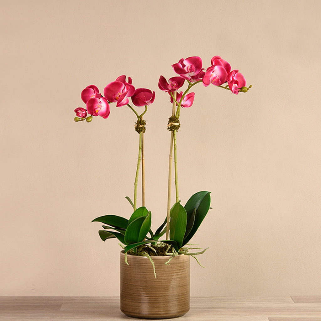 bloomr-usa Flowers Small / Magenta Placid Orchid Arrangement artificial flowers artificial trees artificial plants faux florals