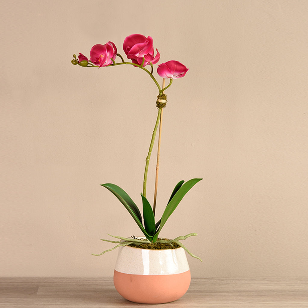 bloomr-usa Flowers Small / Magenta Santa Fe Orchid Arrangement artificial flowers artificial trees artificial plants faux florals