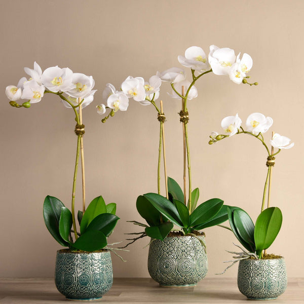 bloomr-usa Flowers Small Marrakech Orchid Arrangement artificial flowers artificial trees artificial plants faux florals