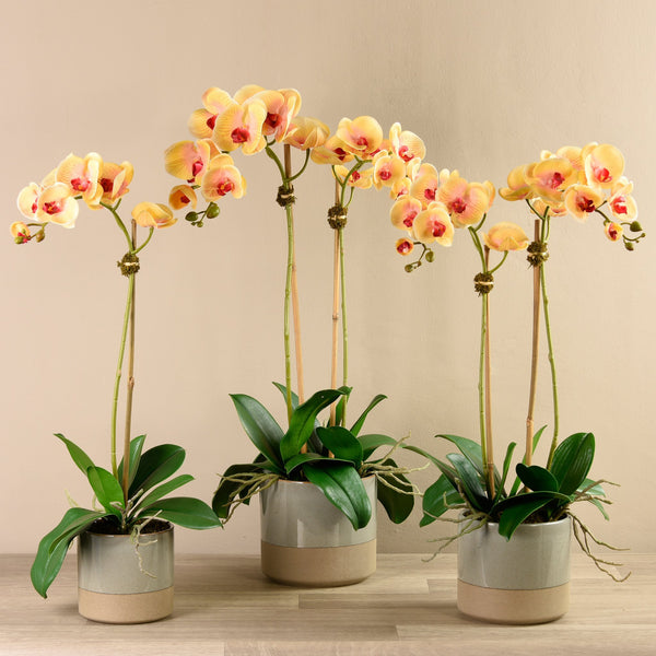 Bloomr-USA Flowers Small / Orange Orchid Arrangement in Ceramic Vase artificial flowers artificial trees artificial plants faux florals