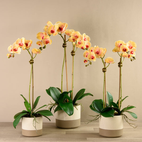 Bloomr-USA Flowers Small Orchid Arrangement in Ceramic Vase artificial flowers artificial trees artificial plants faux florals