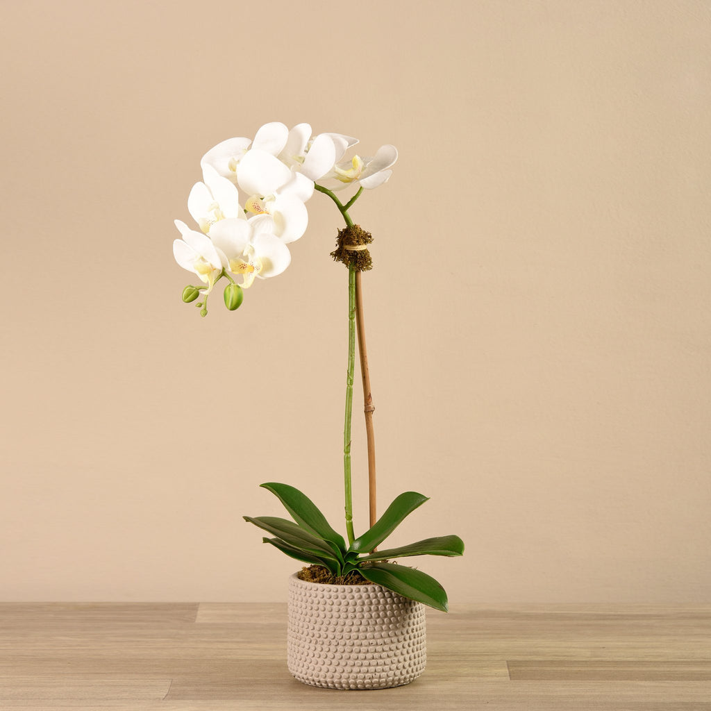 Bloomr-USA Flowers Small Orchid Arrangement artificial flowers artificial trees artificial plants faux florals