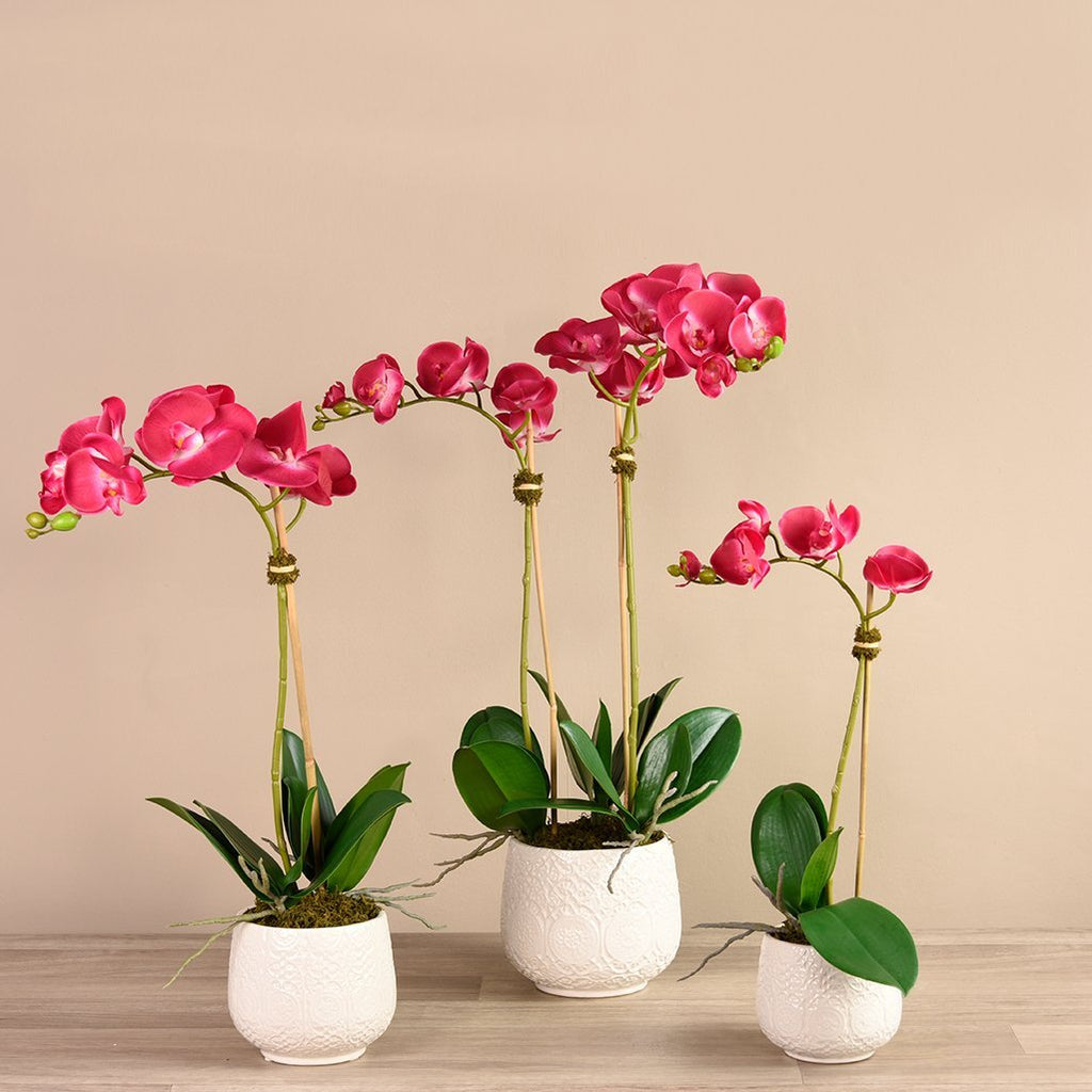 bloomr-usa Flowers Small / White Marrakech Orchid Arrangement artificial flowers artificial trees artificial plants faux florals