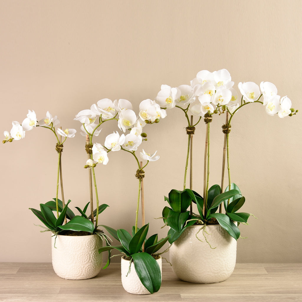 Bloomr-USA Flowers Small / White Orchid Arrangement in Ceramic Vase artificial flowers artificial trees artificial plants faux florals