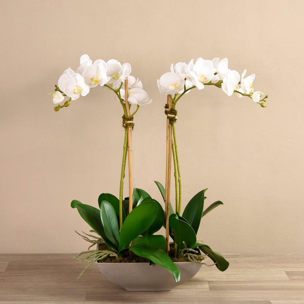 Bloomr-USA Flowers Small / White Orchid Arrangement artificial flowers artificial trees artificial plants faux florals