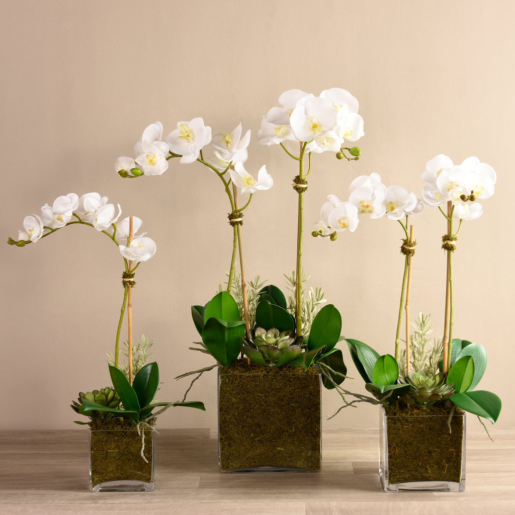 bloomr-usa Flowers Small / White Orchid & Succulent Arrangement (Square Vase) artificial flowers artificial trees artificial plants faux florals