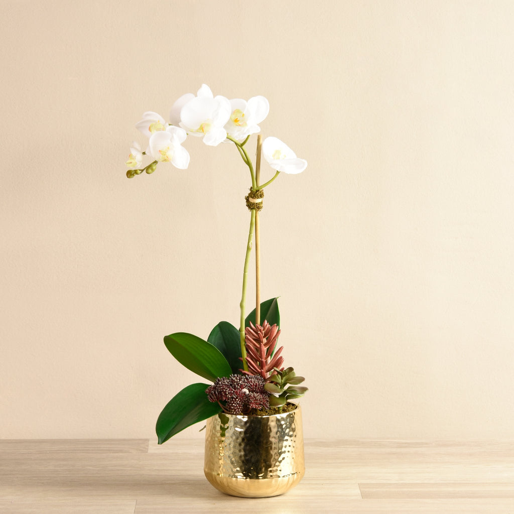 Bloomr-USA Flowers Small / White Orchid With Succulents artificial flowers artificial trees artificial plants faux florals