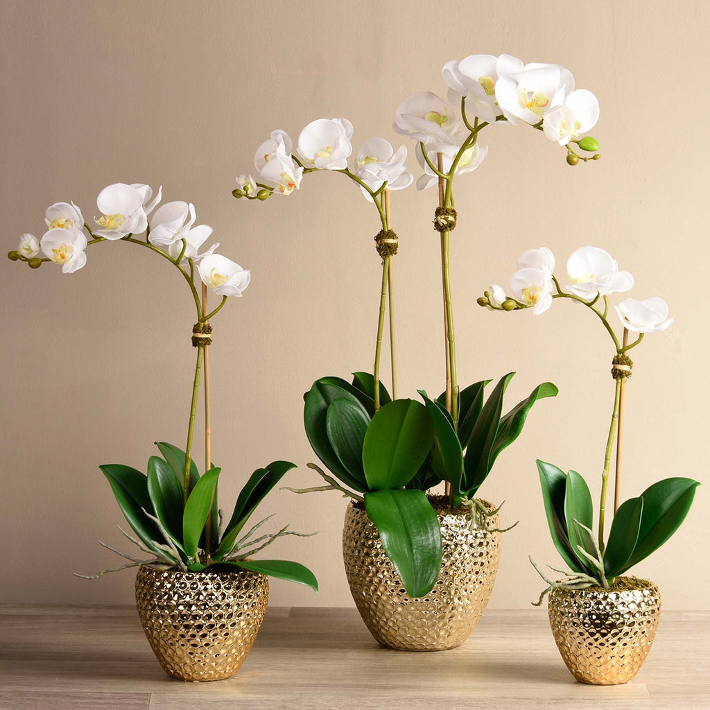 bloomr-usa Flowers Small / White Paradise Orchid Arrangement artificial flowers artificial trees artificial plants faux florals