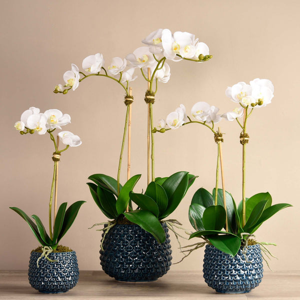 bloomr-usa Flowers Small / White Pearl Orchid Arrangement artificial flowers artificial trees artificial plants faux florals