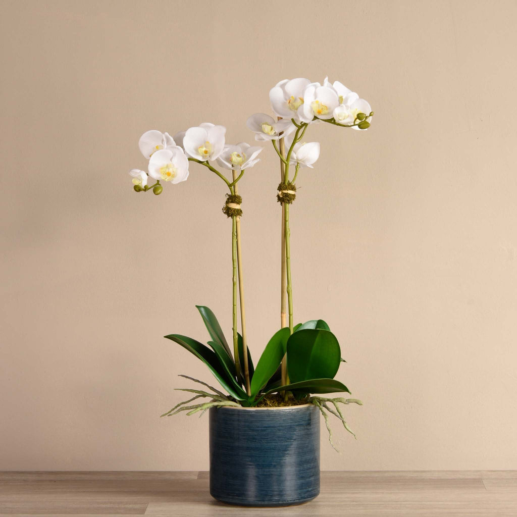 bloomr-usa Flowers Small / White Placid Orchid Arrangement artificial flowers artificial trees artificial plants faux florals