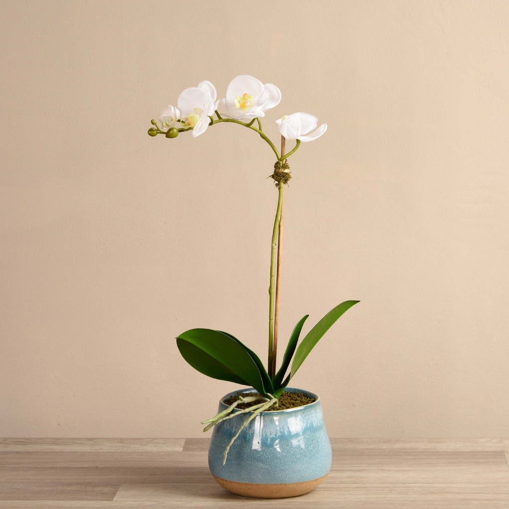 bloomr-usa Flowers Small / White Santa Fe Orchid Arrangement artificial flowers artificial trees artificial plants faux florals