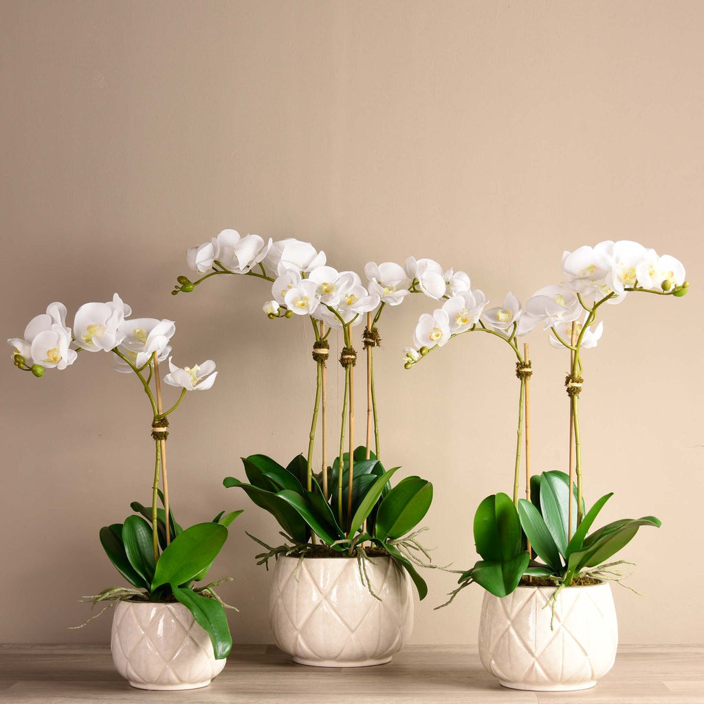 bloomr-usa Flowers Small / White Stella Orchid Arrangement artificial flowers artificial trees artificial plants faux florals