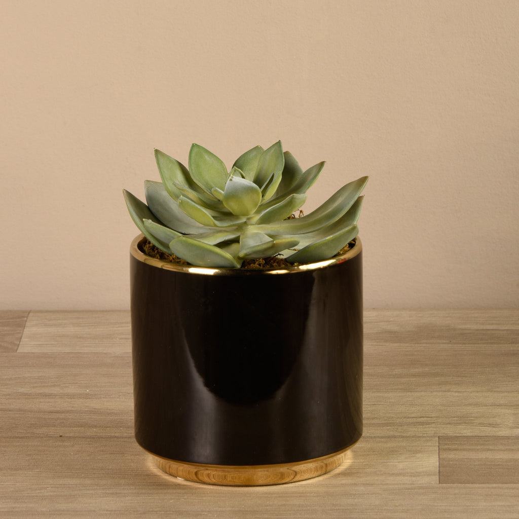 Bloomr-USA Flowers Succulent in Black Pot artificial flowers artificial trees artificial plants faux florals