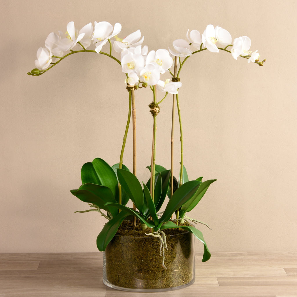 Bloomr-USA Flowers White Orchid Arrangement in Glass Vase artificial flowers artificial trees artificial plants faux florals