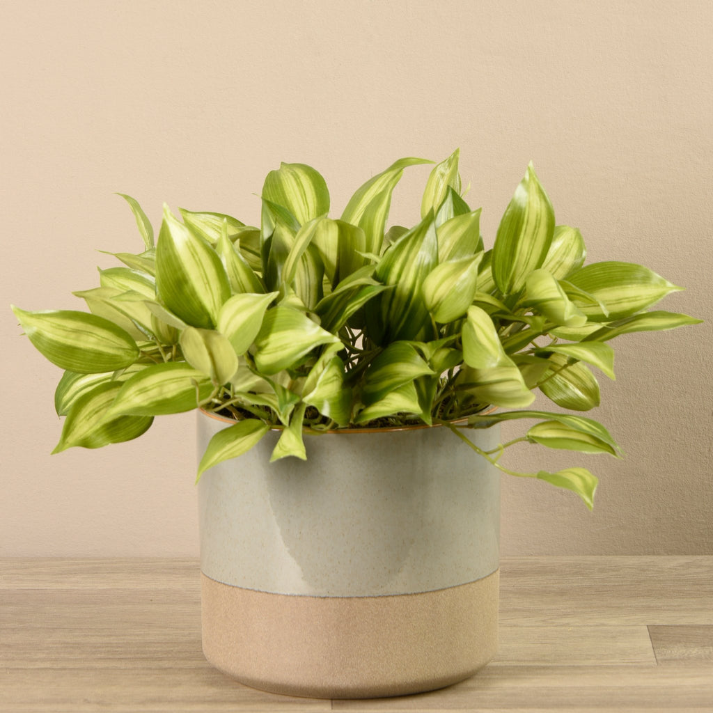 Bloomr-USA Greenery Large Potted Vanilla Leaf Plant artificial flowers artificial trees artificial plants faux florals