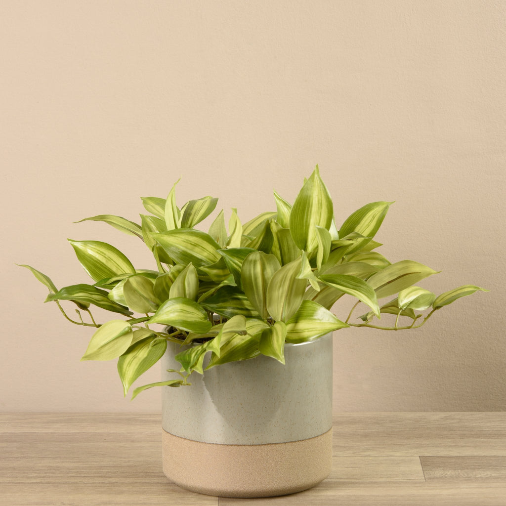 Bloomr-USA Greenery Medium Potted Vanilla Leaf Plant artificial flowers artificial trees artificial plants faux florals
