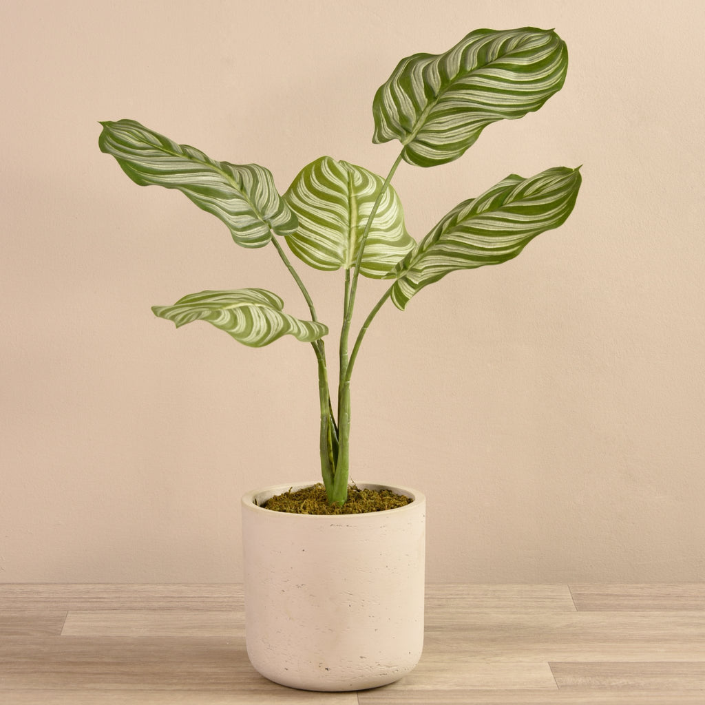 Artificial Calathea Plant in Cement Pot, Faux Calathea Plant in Cement Pot, Fake Calathea Plant in Cement Pot  - Bloomr
