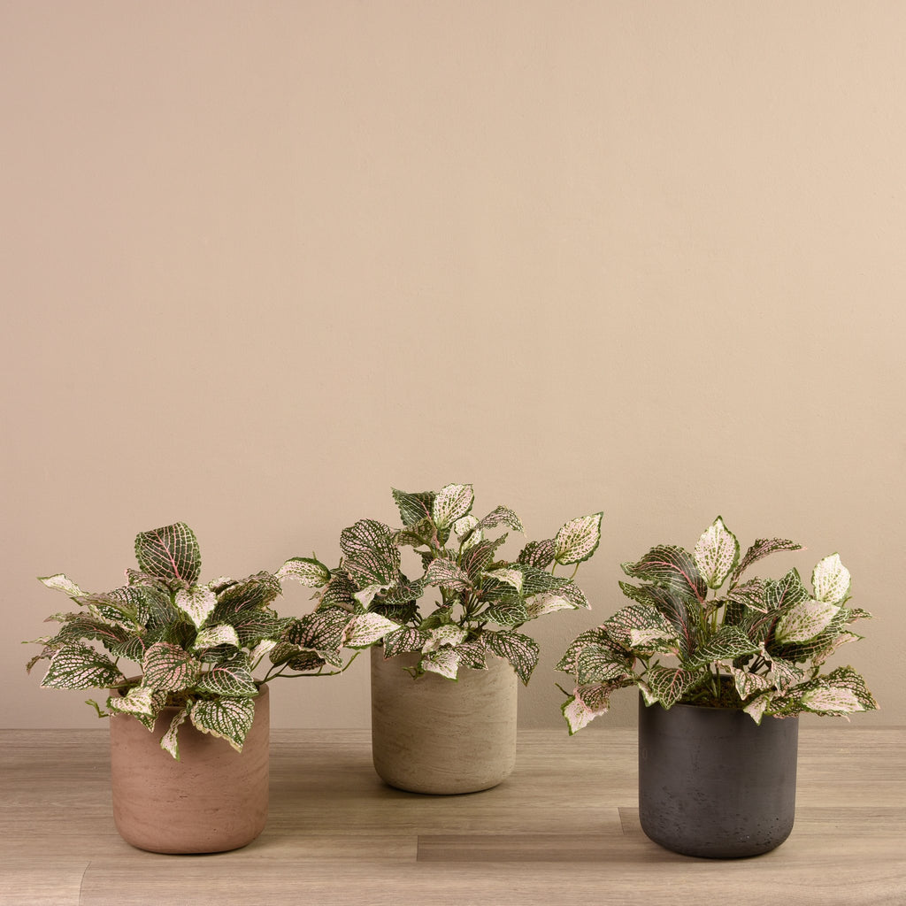 Artificial Fittonia in Cement Pot, Faux Fittonia in Cement Pot, Fake Fittonia in Cement Pot  - Bloomr