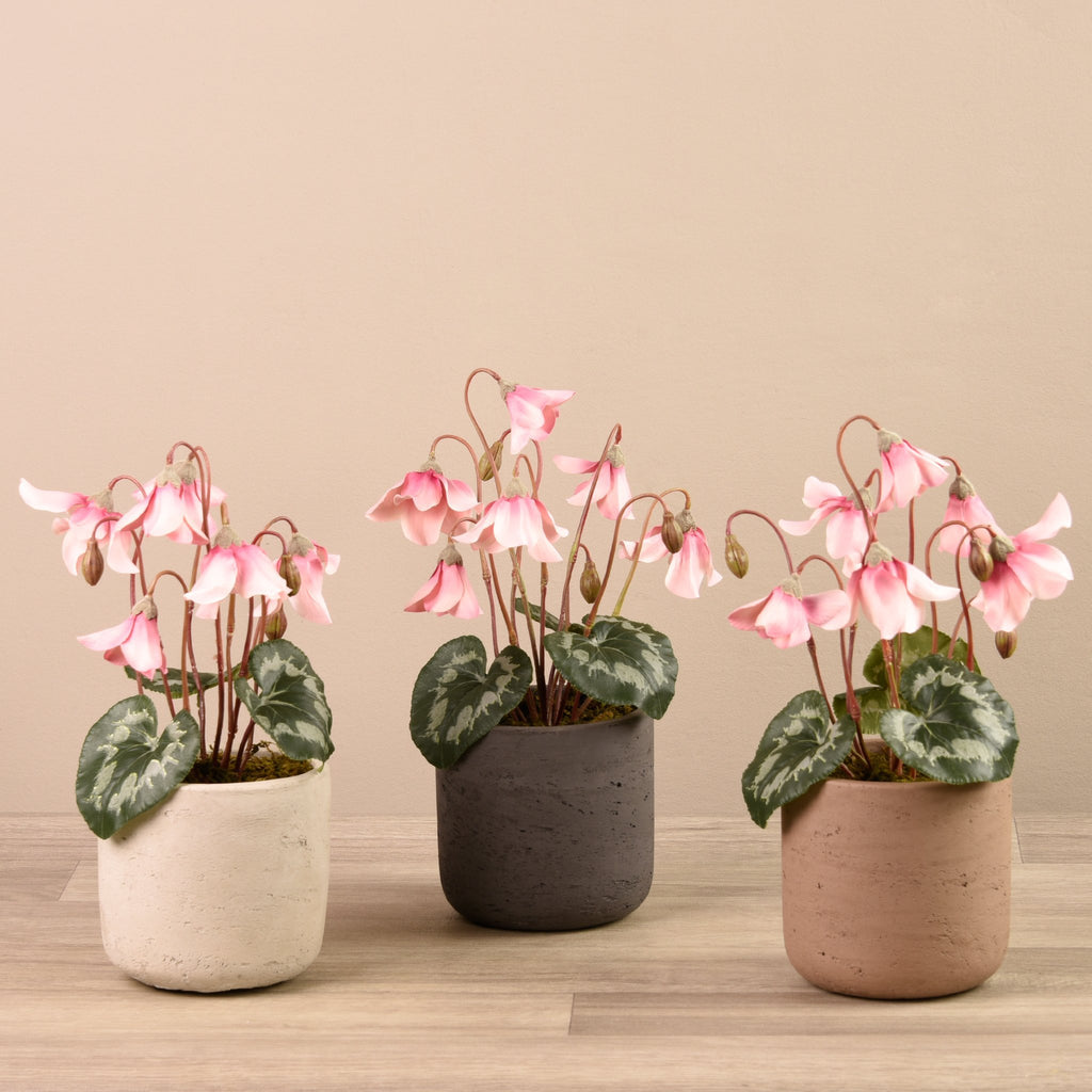 Bloomr-USA Plants Beige Medium Peperomia Potted artificial flowers artificial trees artificial plants faux florals