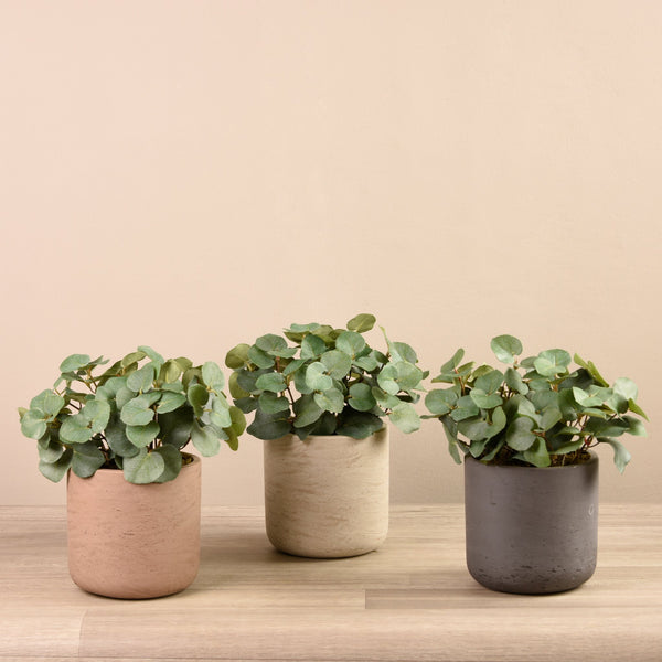 Bloomr-USA Plants Beige Potted Cyclamen artificial flowers artificial trees artificial plants faux florals