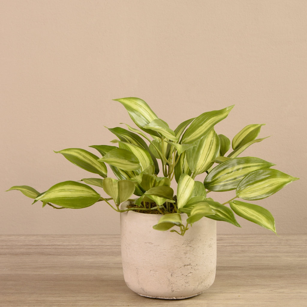 Bloomr-USA Plants Beige Vanilla Orchid Leaf in Cement Pot artificial flowers artificial trees artificial plants faux florals