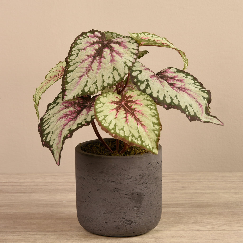 Artificial Begonia in Cement Pot, Faux Begonia in Cement Pot, Fake Begonia in Cement Pot  - Bloomr
