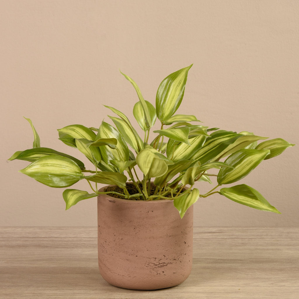 Bloomr-USA Plants Brown Vanilla Orchid Leaf in Cement Pot artificial flowers artificial trees artificial plants faux florals
