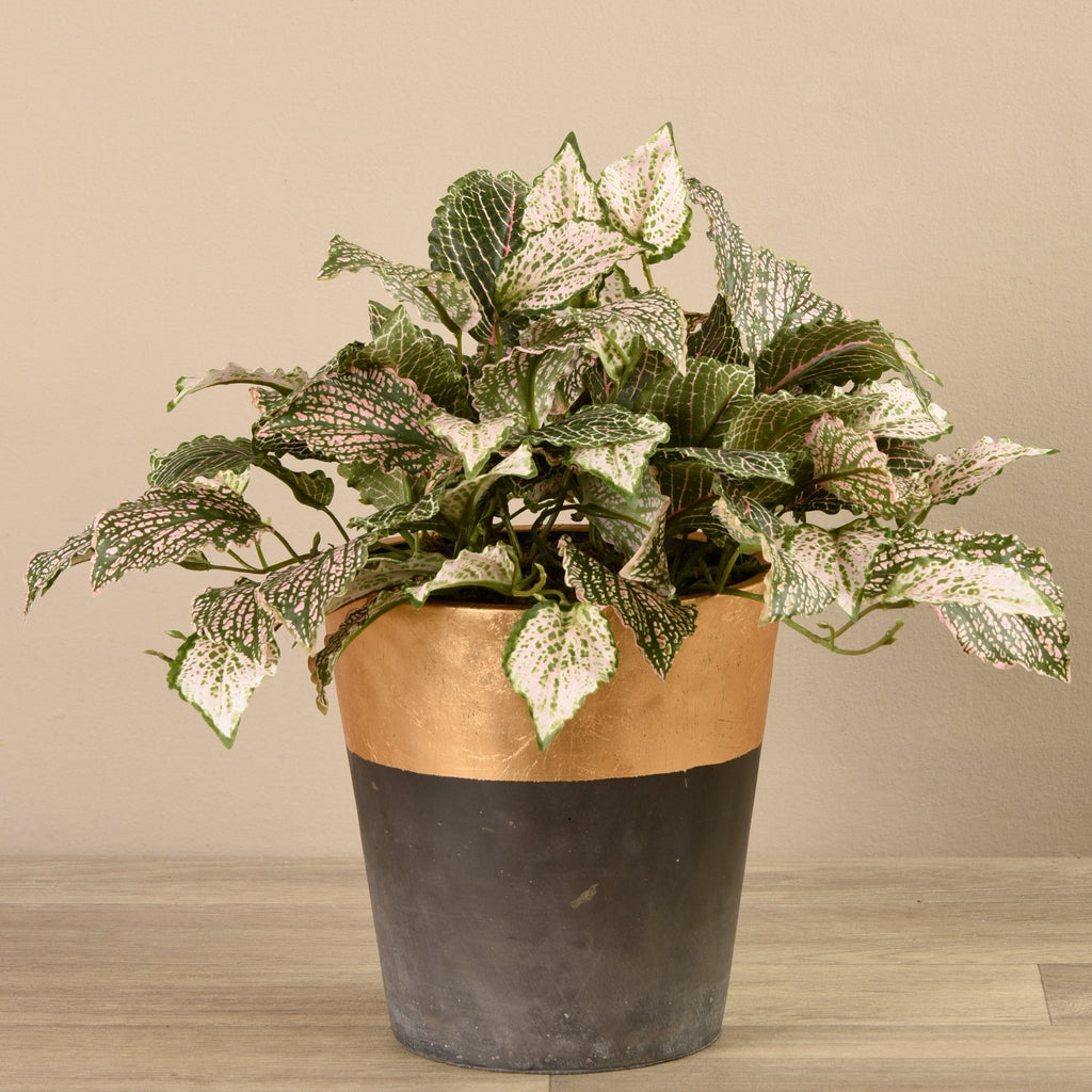 Bloomr-USA Plants Medium Potted Fittonia artificial flowers artificial trees artificial plants faux florals