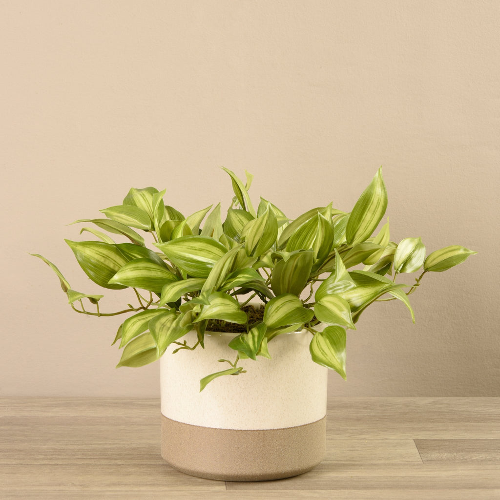 Bloomr-USA Plants Medium Potted Vanilla Plant artificial flowers artificial trees artificial plants faux florals